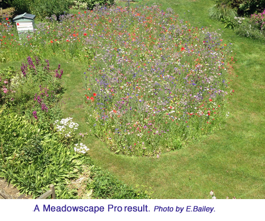 MeadowscapeResults CreditElain copy