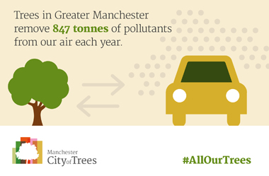 manc city of trees cot-statistic-5