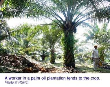 palm oil iceland RSPO worker copy