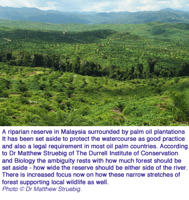 palm oil riparian copy