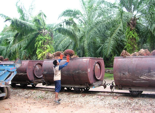 palm oil wagon load