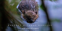Documentary explores Britain's attitude to controversial beaver reintroductions