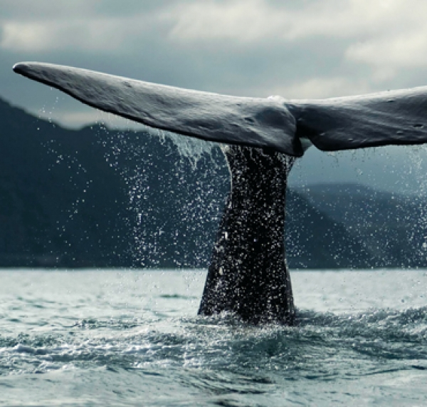 Diving deep into the sound of blue whales to help them prosper with ships