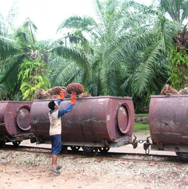 Palm oil crisis looms as sustainable certified supplies drop following suspensions