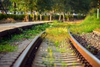 Managing the wildlife on our railways