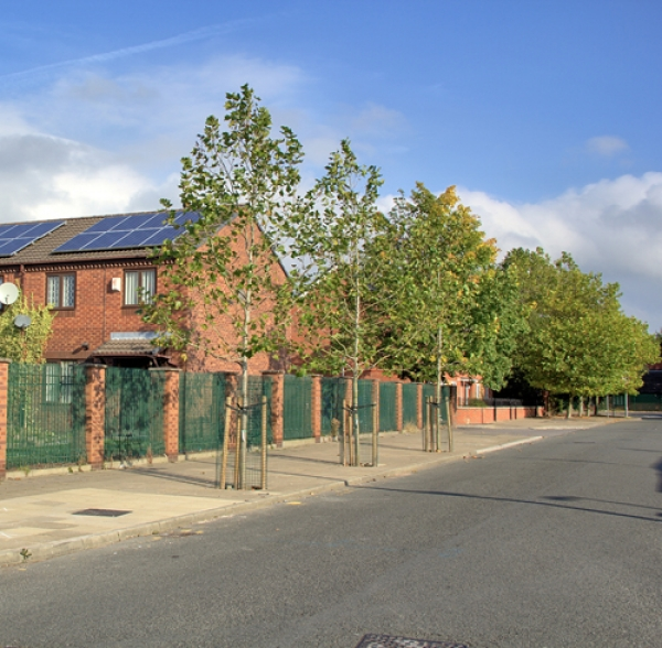Salford street tree project shows way to reduce urban flooding