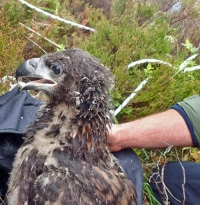 Scottish courier's reduced rate service helps veterinary university conserve birds of prey