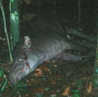 Hunting of large mammals in tropical forests worsens climate change