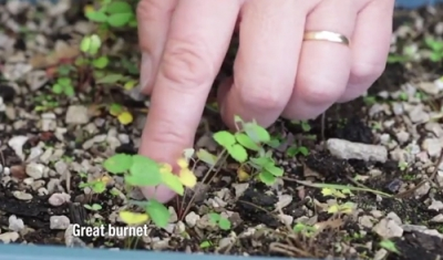 How to sow & grow wildflower seeds to help the ecosystem