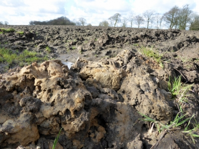 Businesses don't realise the importance of soil to their bottom line