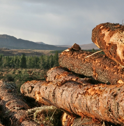 Wood should be used firstly as a building material not fuel, German study finds