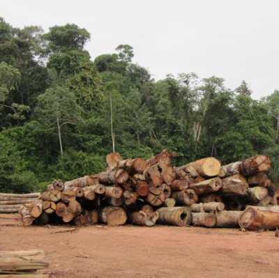Logging old growth tropical timber is far from renewable or sustainable research finds